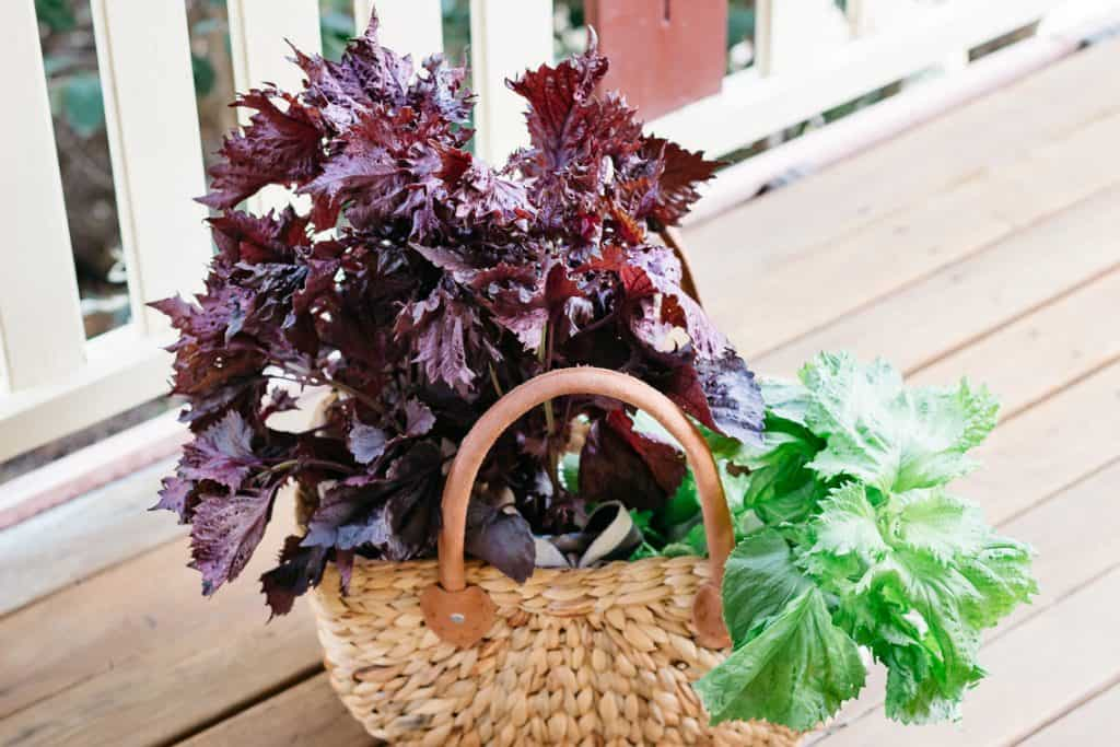 Red shiso leaf and green shiso leaf in a basket