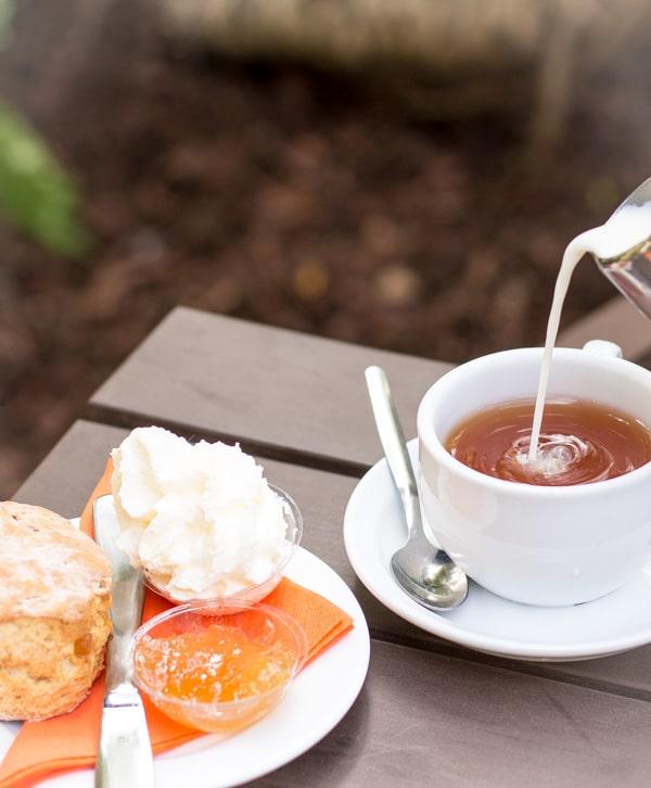 Pickled Ginger scorne and tea