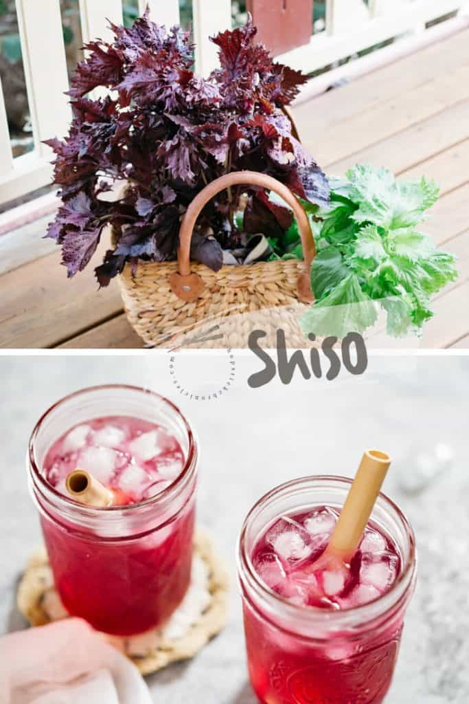 Red shiso and green shiso leaves on top half of the photo and two glasses of shiso juice on the bottom half