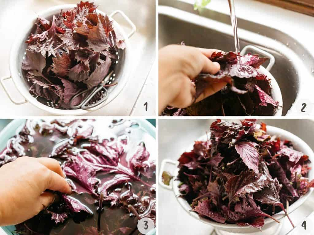 4 photo collage showing triming and washing red shiso leavs