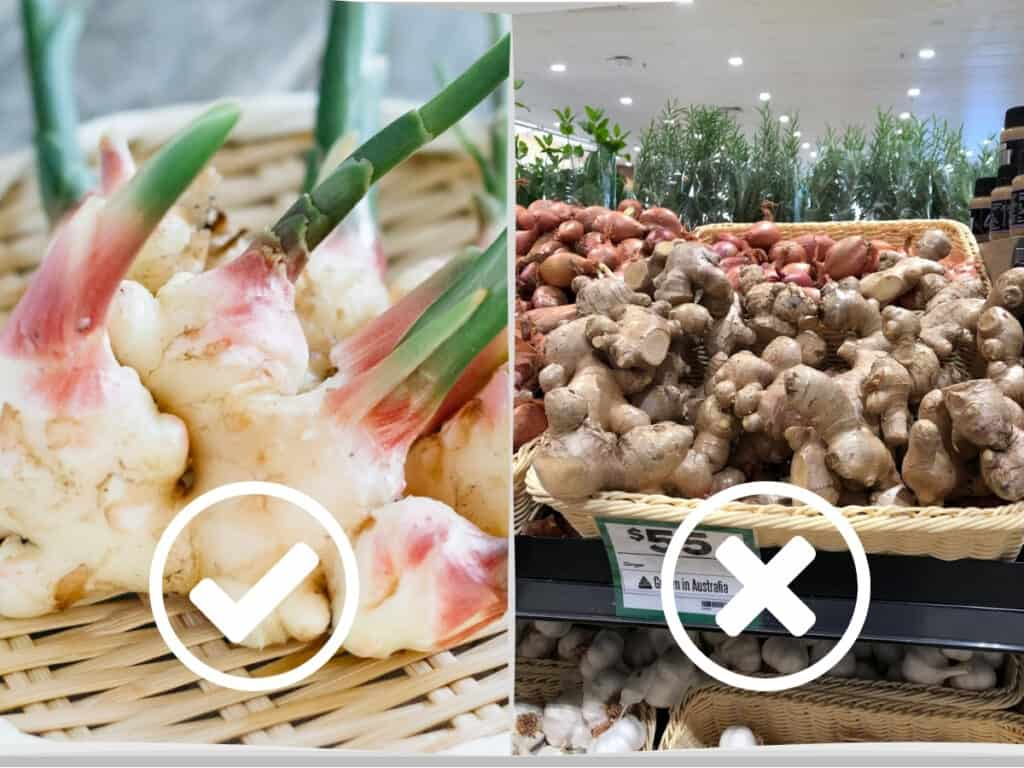 new ginger rhizomes on the left and ordinary ginger on supermarket shelf on the right