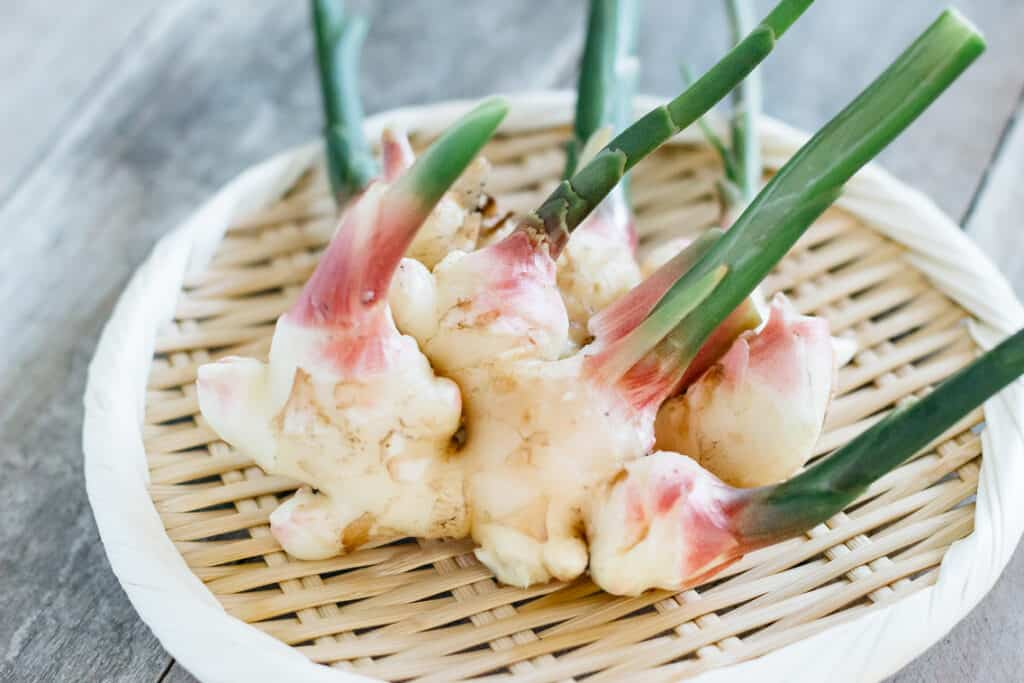 new ginger rhizomes just harvested on a bamboo tray