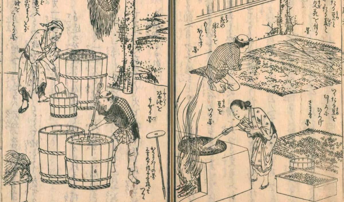 drawing of making soy sauce by 広益国産考 8巻
